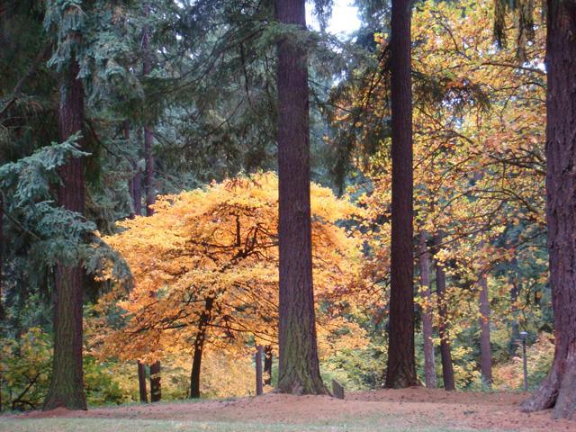 Portland park