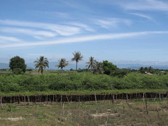 Fruit field