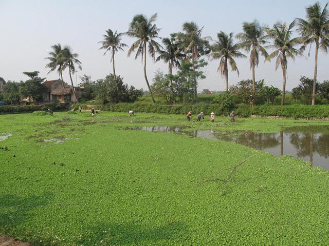 Ancient village de Duong Lam