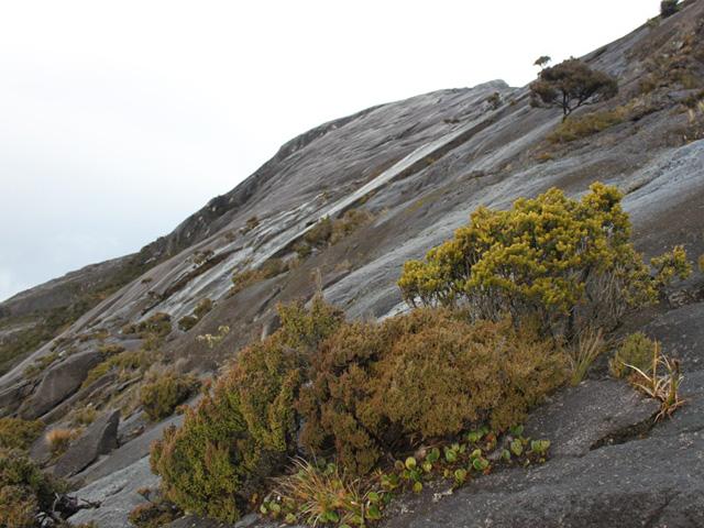 Parc national du Kinabalu