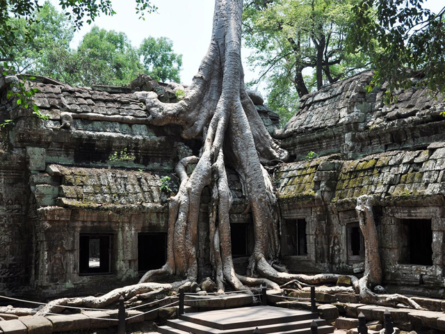 Bayan Roots, Ta Prohm