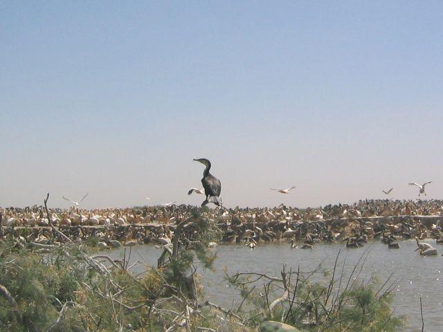 Parc national des oiseaux du Djoudj