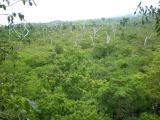 Falealupo rainforest
