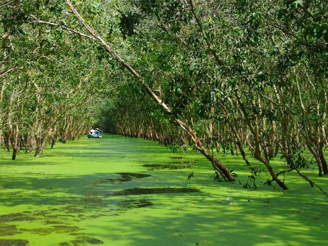 Flooded Indigo forest