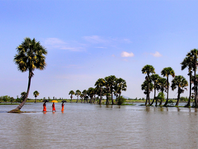 Flooded palm trees