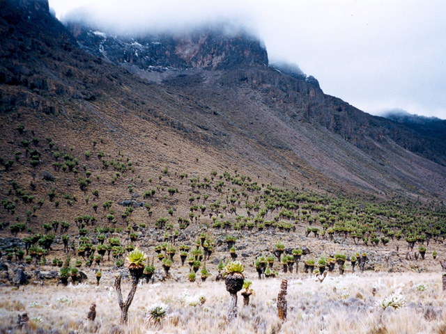 Forêt naturelle du mont Kenya