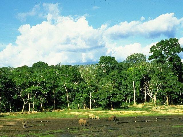 Parc national du Manovo-Gounda St Floris