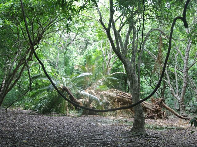 Forêts sacrées de kayas des Mijikenda