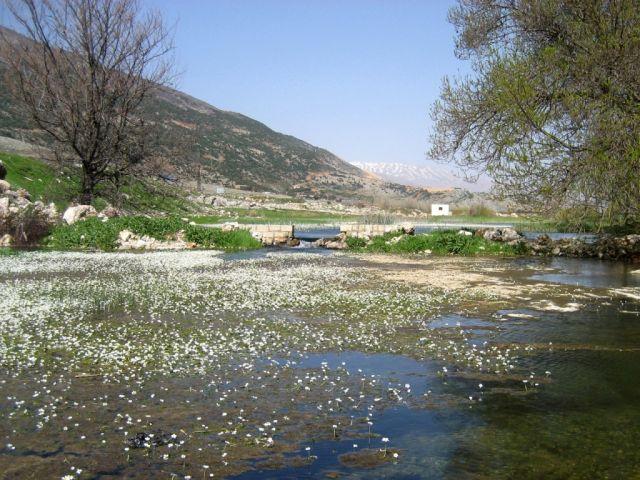 Plaine de la Bekaa