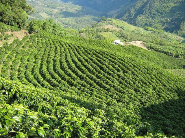 Paysage culturel du café de la Colombie