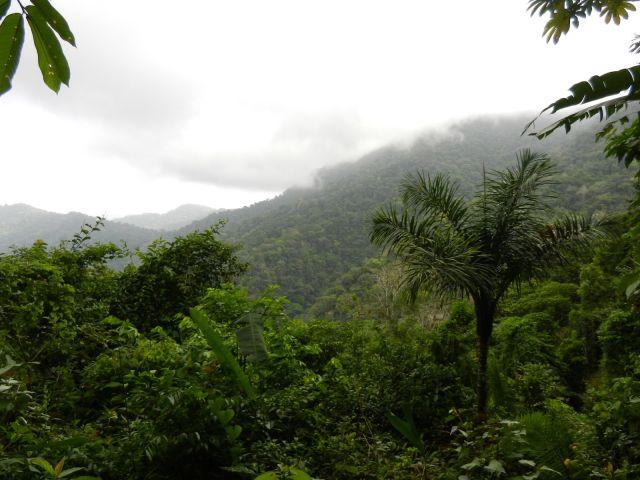 Parc national du Darien