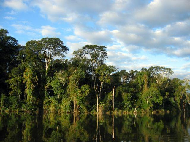 Côte de la découverte - Réserves de la forêt atlantique