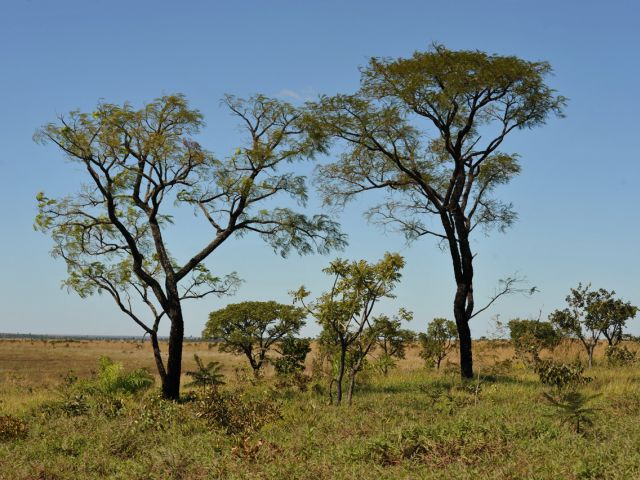 Park National d'Emas