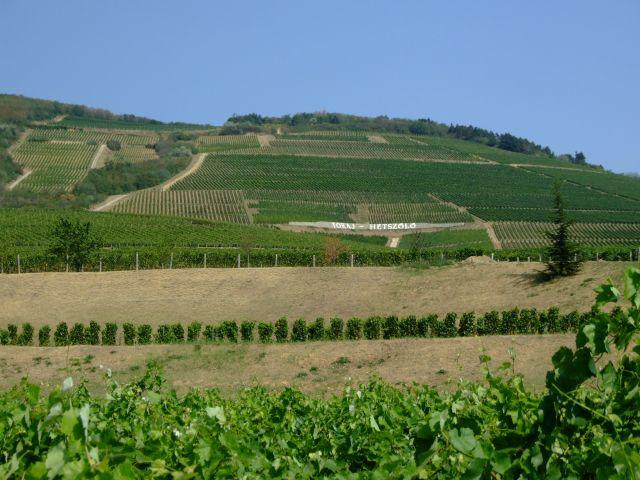 Vignobles Hétszőlő