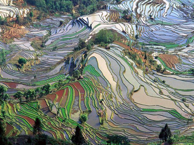 Rizières en terrasse des Hani de Honghe