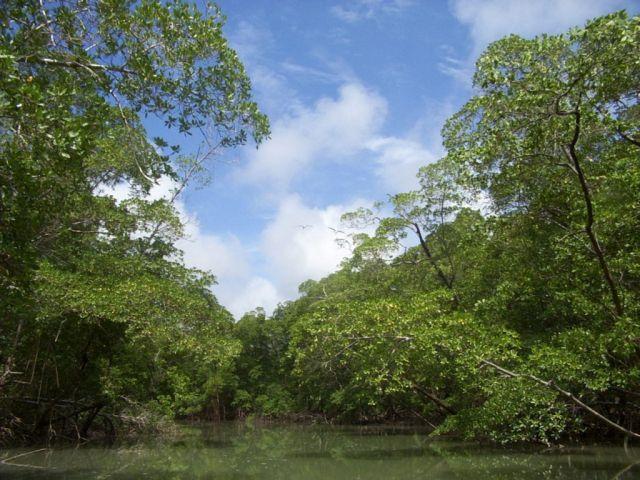 Parc national de Jau