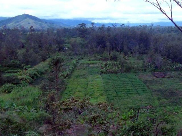 Ancien site agricole de Kuk