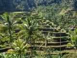 Category Bali Subak