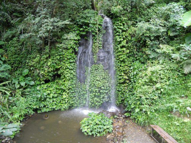 Patrimoine des forêts tropicales ombrophiles de Sumatra