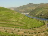 Alto Douro vineyard