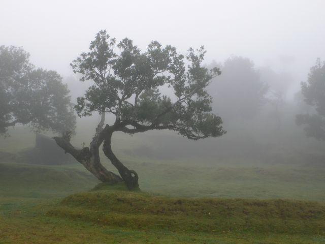 Forêt Laurifière de Madère