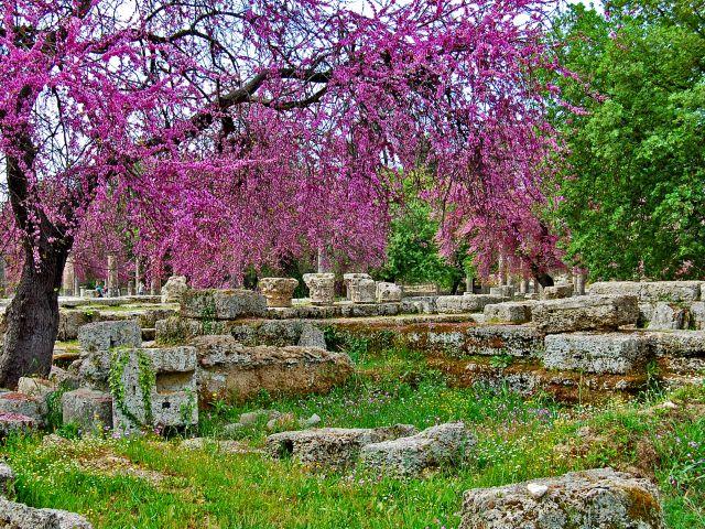 Printemps, arbres en fleurs