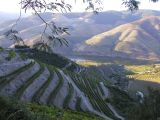 Terraced vineyards along the Douro river