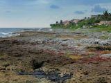 Fragment de la côte près de Puerto Aventuras