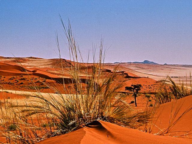 Dunes of the Namib