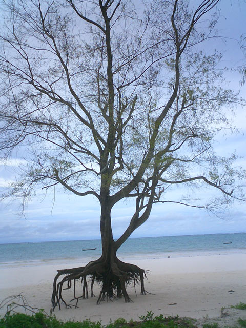 White-sanded beach