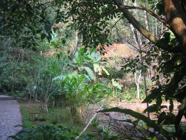 Rainforest Valley