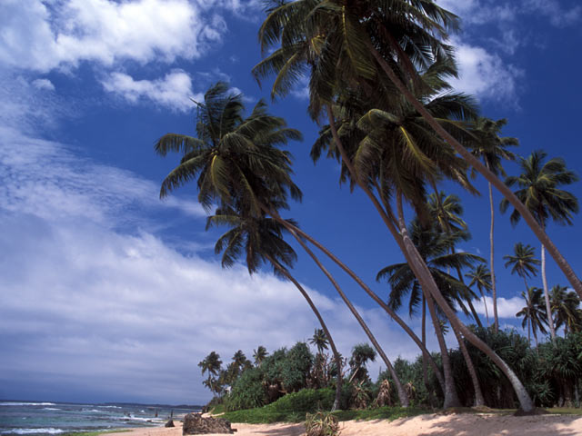 Beach in Sri Lanka