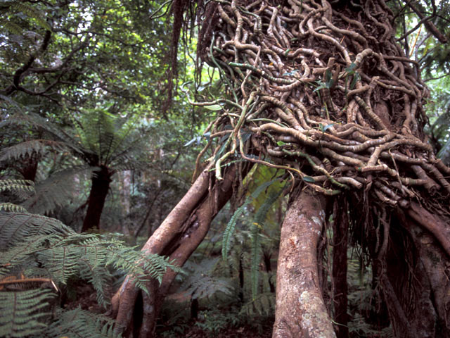 Sri Lanka forest