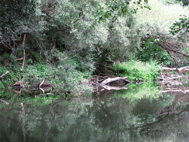 Rivière Strymon