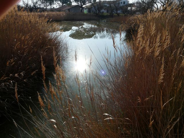 Water end reeds
