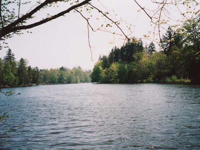 Rotwildpark