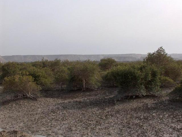 Hara marine forests