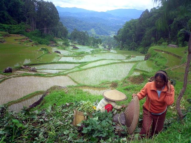 Toraja countryside