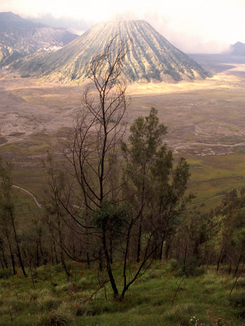 Category Java Bromo National Park