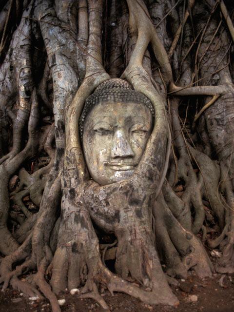 Buddha in the tree